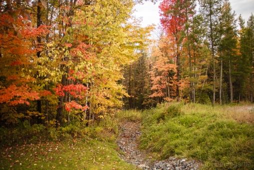 FallFoilage_Vermont_18
