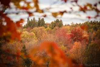 FallFoilage_Vermont_19