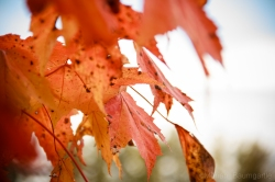 FallFoilage_Vermont_22