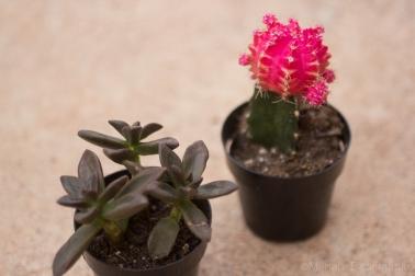 cactusgarden-2