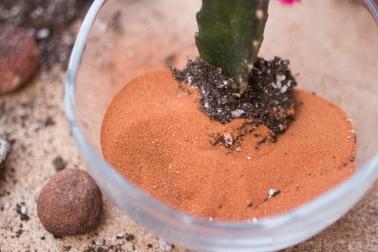 cactusgarden-6