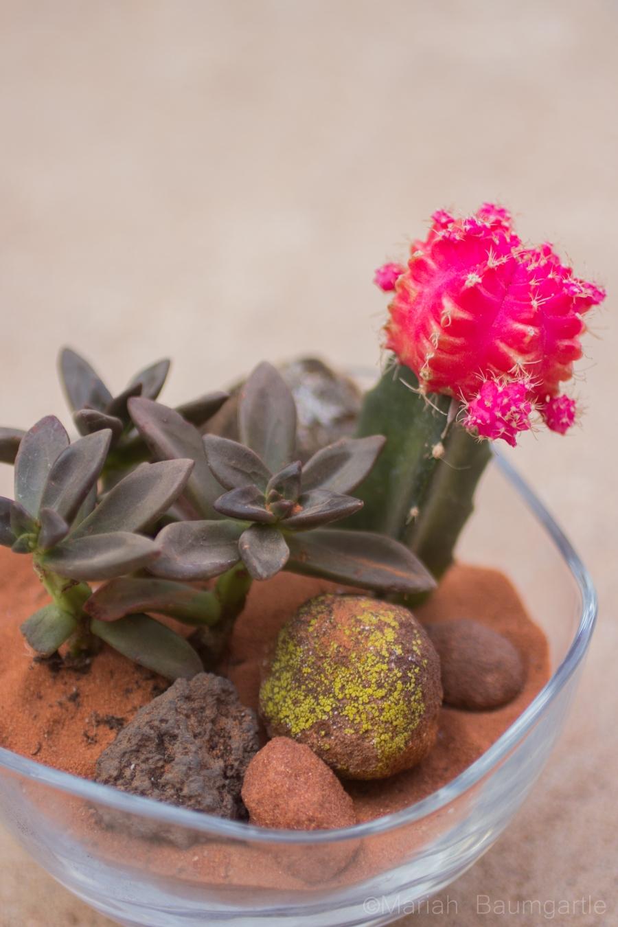 cactusgarden-7.JPG